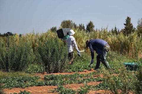 पोर्चुगलमा खेतीमा काम गर्ने नेपालीमा कोरोना संक्रमण,  क्वारेन्टाइनमा राखेर उपचार गरिँदै